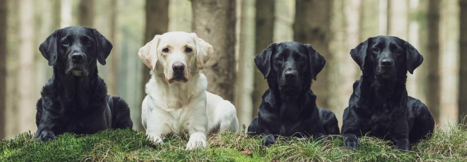 Borby S Labradors Christiane Braaker Lohnert Jan Braaker Uber Uns